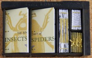 Elizabeth Shorrock - Anatomy of Insects and Spiders