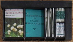 Elizabeth Shorrock - Observer Book of Grasses