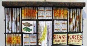 Elizabeth Shorrock artist - Seashores and Shallow Seas