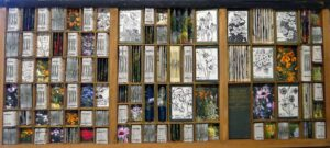 Elizabeth Shorrock artist - The Gardening Encyclopedia